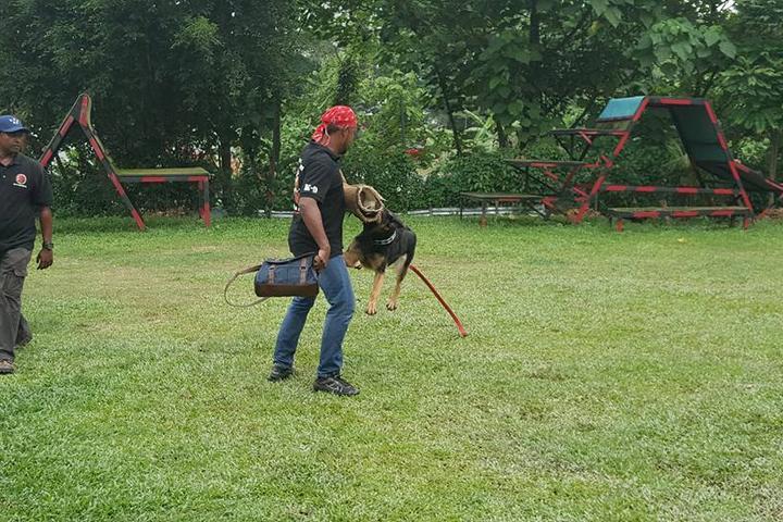 Pet Friendly Stephen Guard Dog Training Center