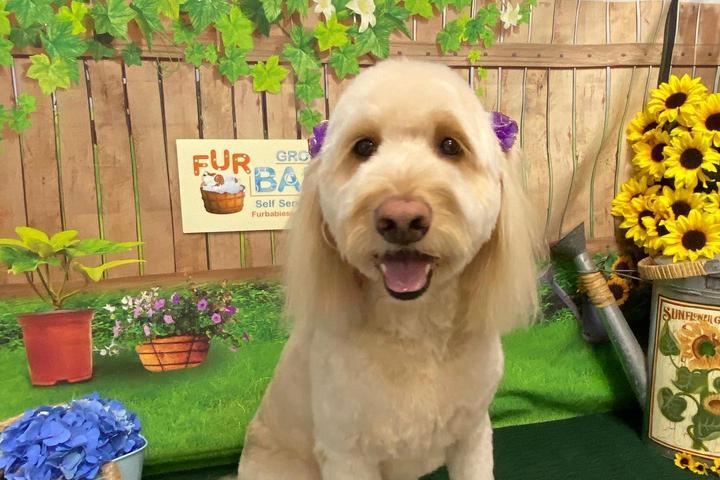 Pet Friendly Fur Babies Self Service Dog Wash, LLC & Dog Grooming