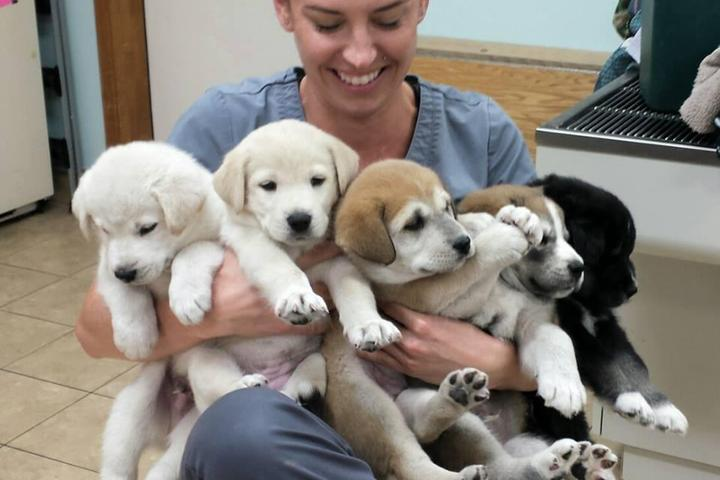 Pet Friendly Fernandina Beach Animal Clinic