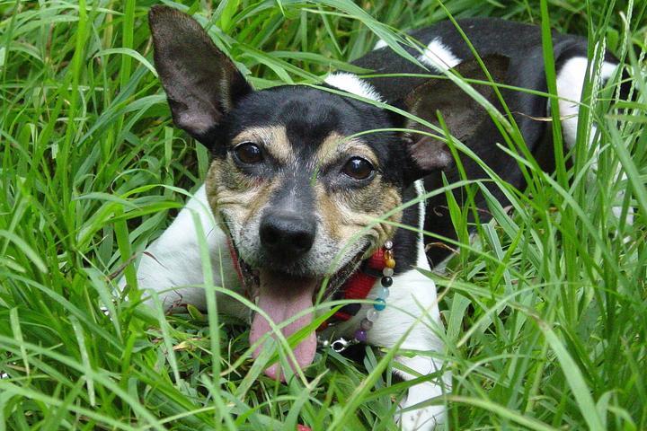 Pet Friendly In Tune Dogs