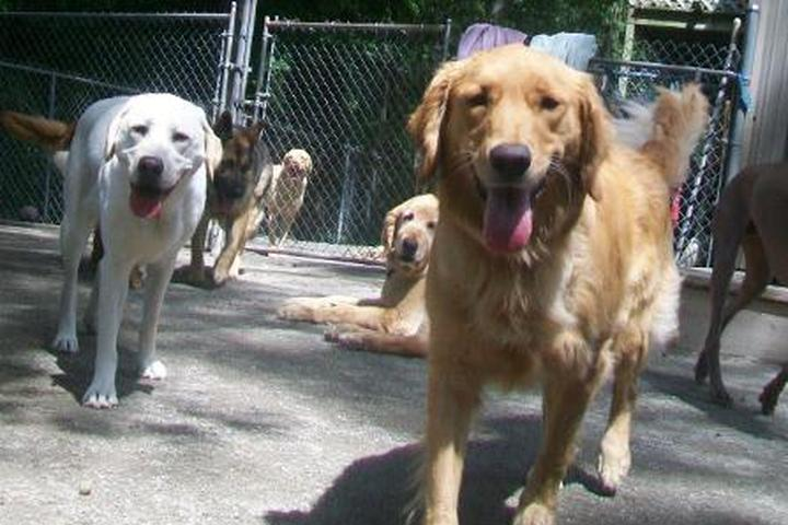 Pet Friendly Best Friends Pet Care