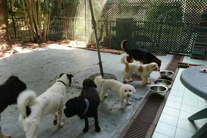 Pet Friendly DB DOG DAYZ