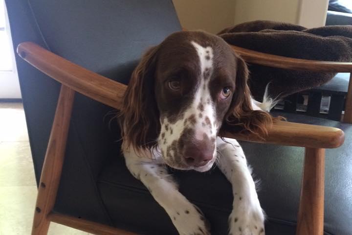 Pet Friendly BJK9's Positive Dog Training