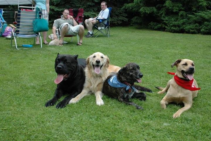 Pet Friendly Best Friends Dog Training
