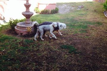 Pet Friendly Pet Hotel San Miguel