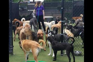 Pet Friendly Kennel Creek Pet Resort