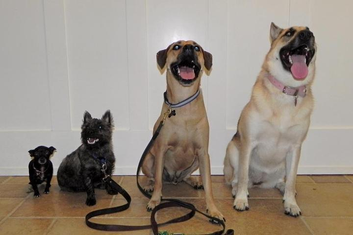 Pet Friendly Doggone Vacations & Daycare