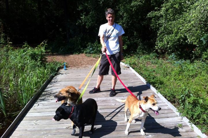 Pet Friendly WAGS Dog Walking + Pet Sitting