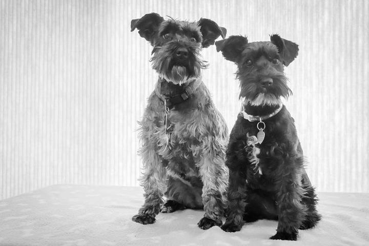 Pet Friendly Furs In Focus Pet Photography