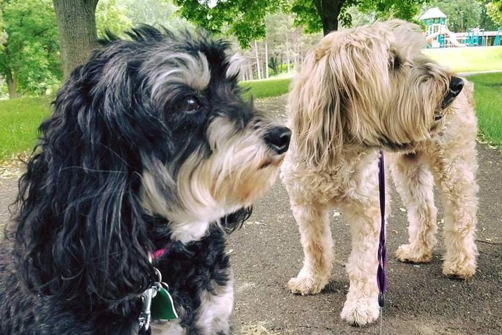 Pet Friendly Rock Star Dog Walking & Pet Sitting, LLC