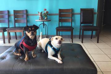 Pet Friendly West U Veterinary