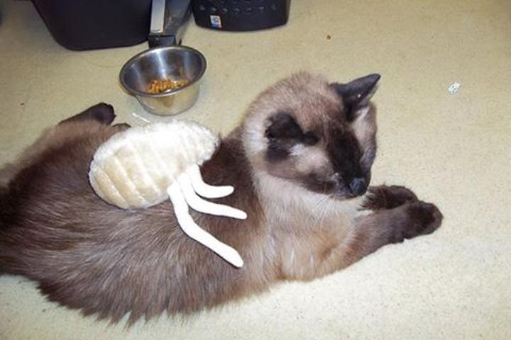 Pet Friendly Ocean Valley Veterinary Hospital