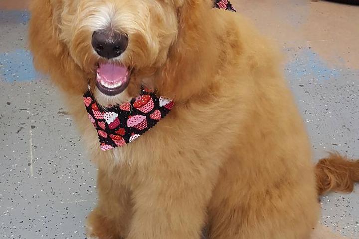 Pet Friendly Rub-A-Dub Dog Wash