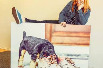 Pet Friendly Marcia Leeder Photography