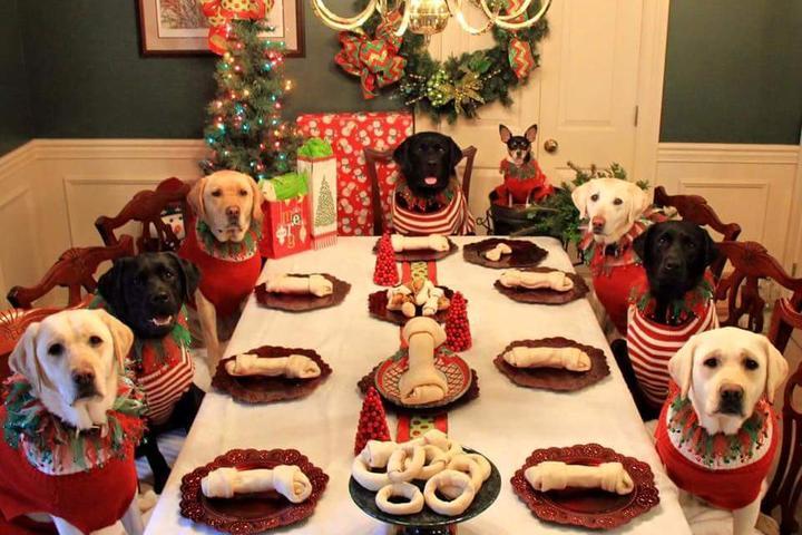 Dog Friendly Freehold, NJ - Bring Fido