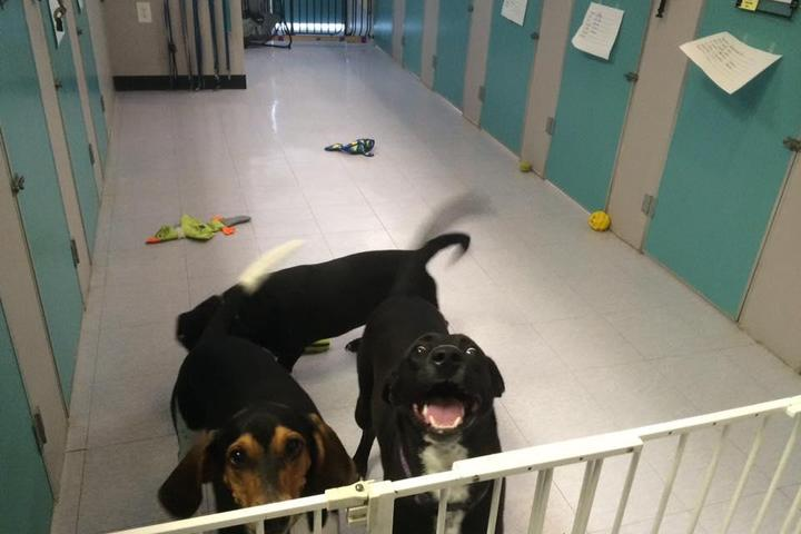 Pet Friendly Posh Puppy & Camp Tinker's LLC
