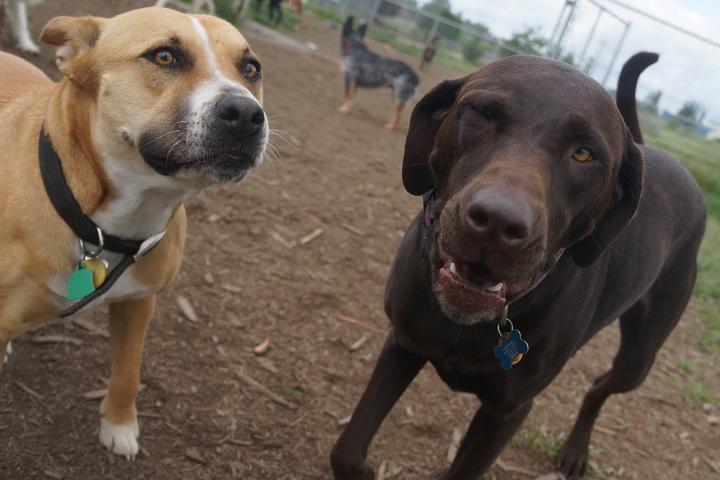 Pet Friendly Northwest Kennels