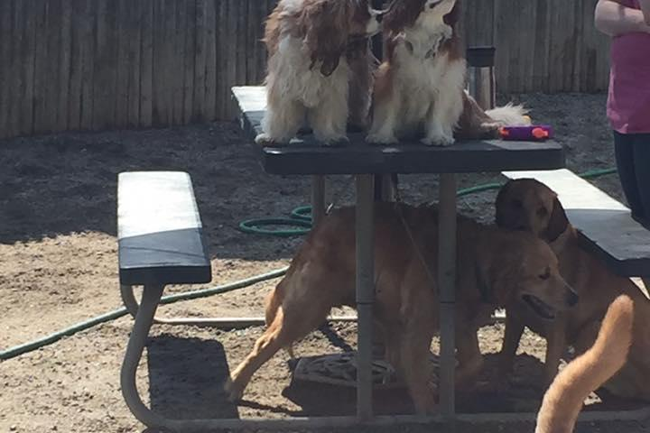 Pet Friendly Diamond Creek Pet Retreat/Canine Sports Center
