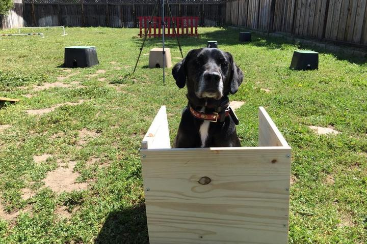 Pet Friendly Canine Tutors Dog Training