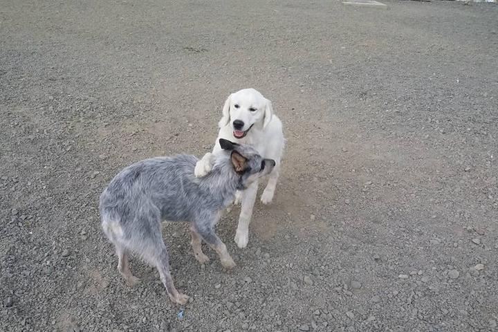 Pet Friendly Acme Canine Center