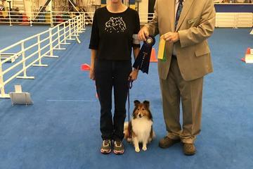 Pet Friendly Upper Suncoast Dog Training Club