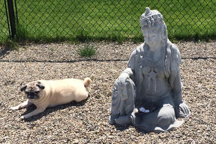 Pet Friendly Ready.Sit.Pets
