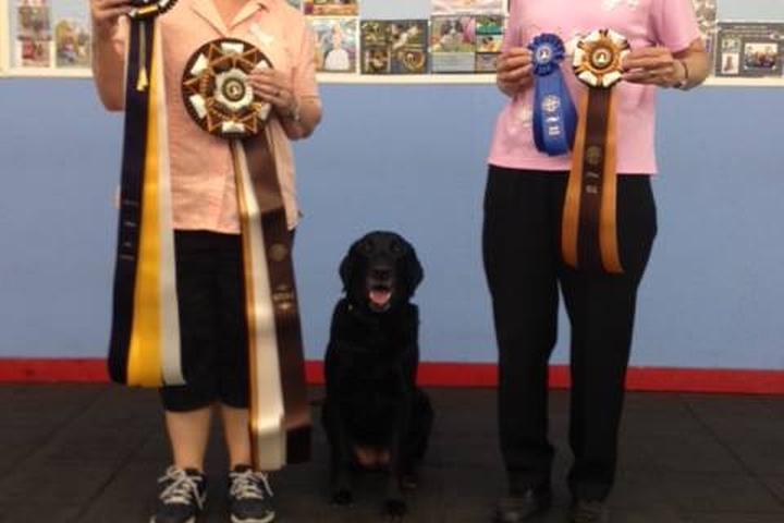 Pet Friendly Blue Ribbon Dog Sports Coaching LLC