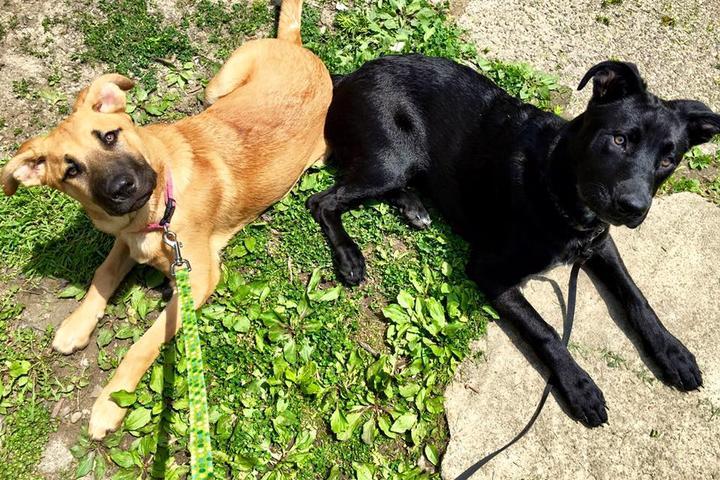 Pet Friendly Tailwaggers Dog Walking & Pet Sitting