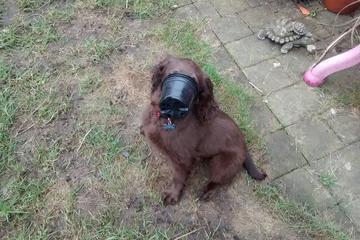 Pet Friendly Dogged Devotion