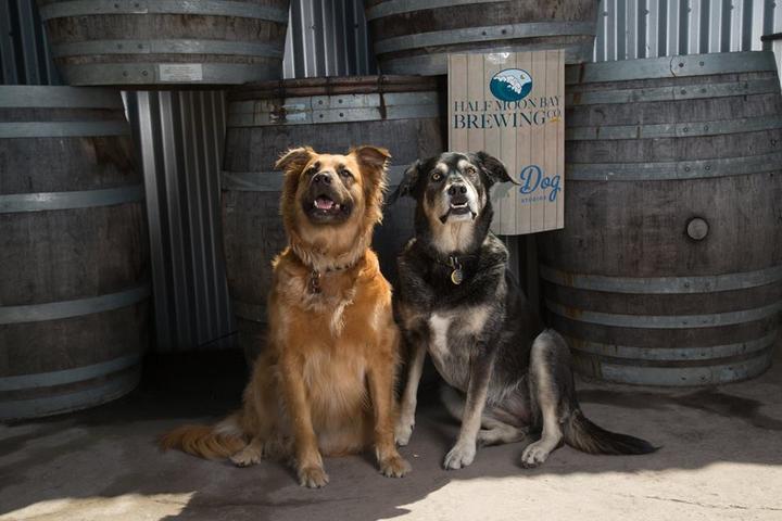 Pet Friendly Half Moon Bay Dogs
