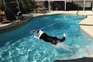 Pet Friendly Bosco's Pet Care Services