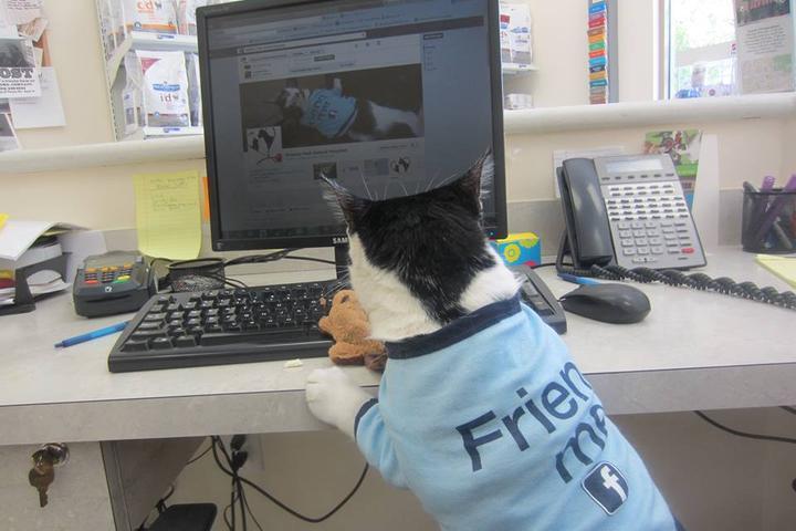 Pet Friendly Victoria Park Animal Hospital