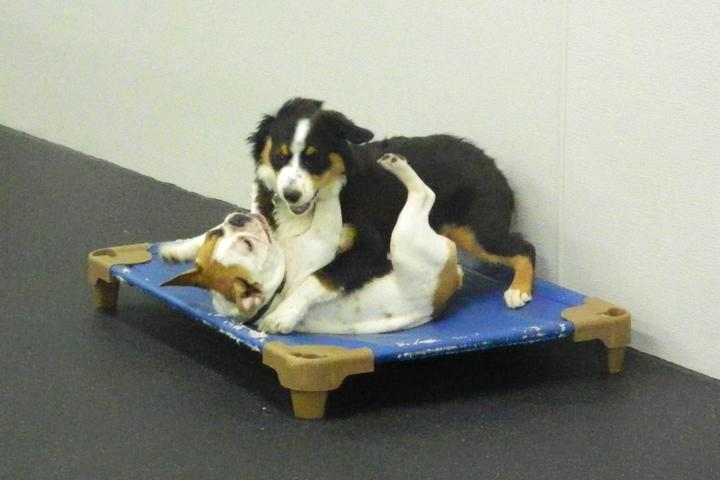 Pet Friendly Dogtopia