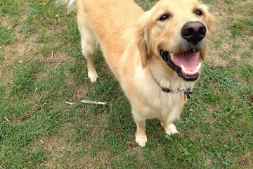 Pet Friendly Pet Buddy Pooper Scooper Service
