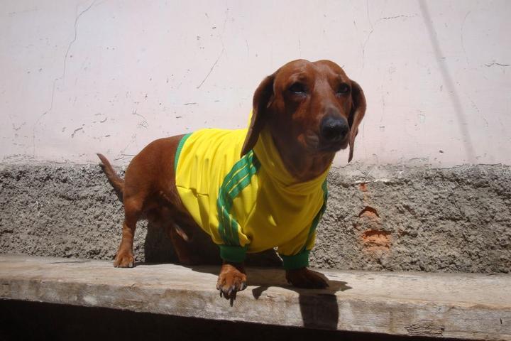 Pet Friendly Jacha Pet