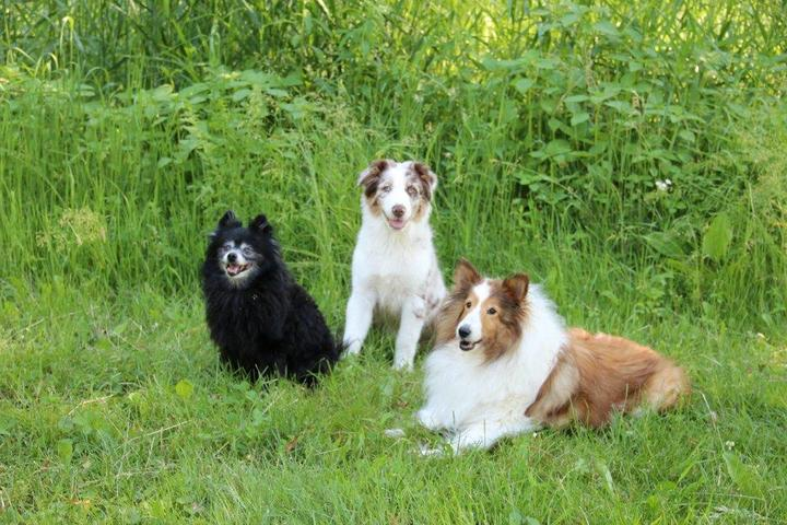 Pet Friendly Fur And Feather Pet Sitting