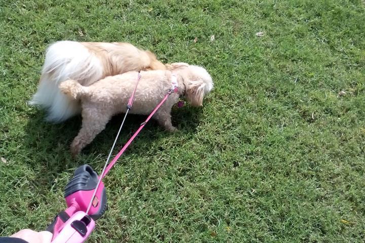 Pet Friendly Mt Juliet Dog Walkers