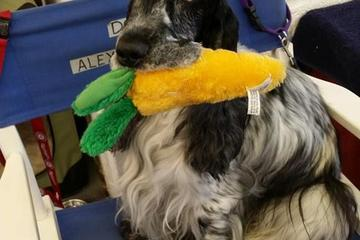 Pet Friendly Kellars Canine Academy