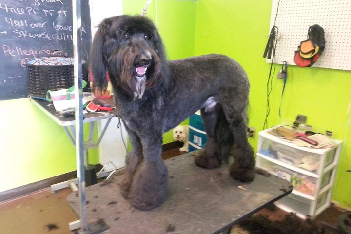 Pet Friendly NoSitStay Full Service Grooming & Pet Supply