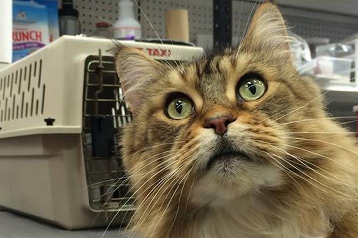Pet Friendly 1st Care Animal Health Clinics