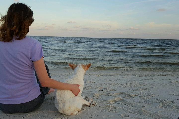 Pet Friendly Pet Parent Paradise