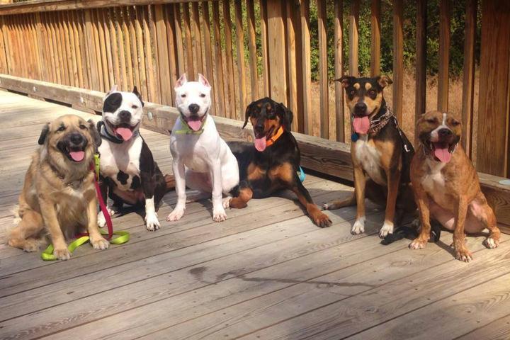 Pet Friendly S.A.S K-9