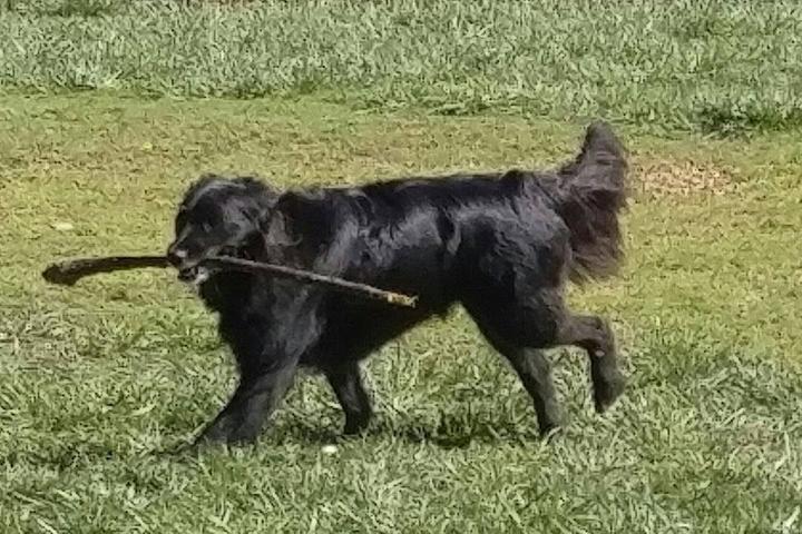 Pet Friendly Dallas and Pals Off-Leash Dog Walking