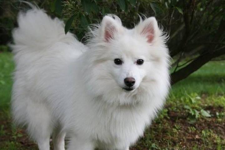 Pet Friendly Beyond Borders Dog Training, LLC