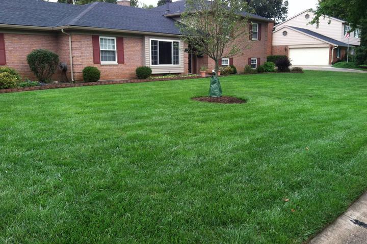 Pet Friendly PureLawn Organic Lawn Care