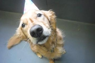 Pet Friendly Canine Social Club