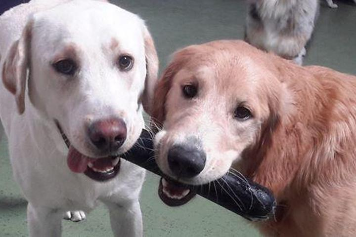 Pet Friendly Wags & Wiggles Dog Daycare & Training Center