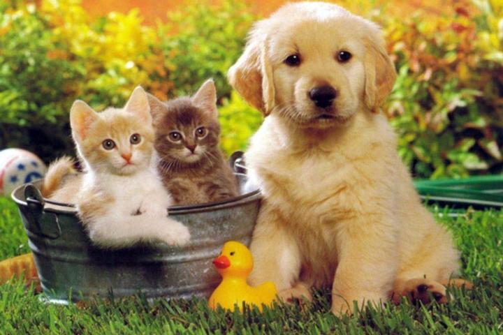 Pet Friendly Loyal Companion
