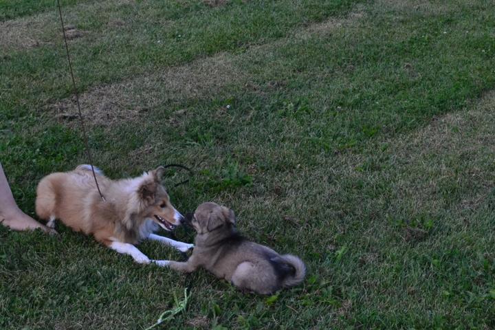 Pet Friendly C.U.P.S. Professional Pet Care