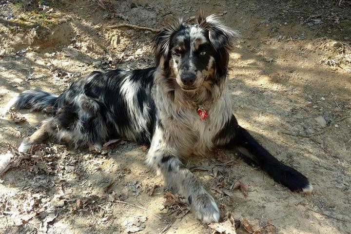 Pet Friendly Pet Supplies Plus #65